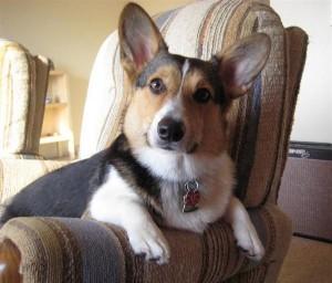 Prednisone dogs cancer