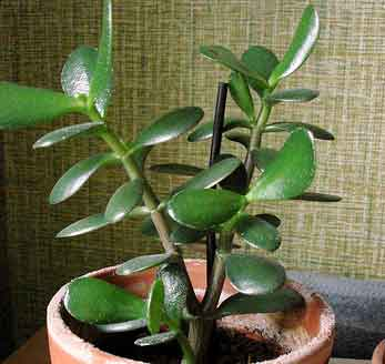 avoid these house plants for the health of your pets doggy bakery. Black Bedroom Furniture Sets. Home Design Ideas