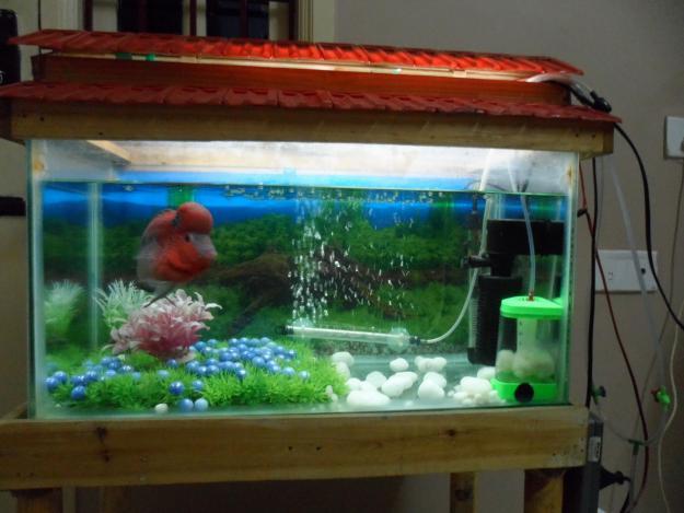 Online aquarium shop in india