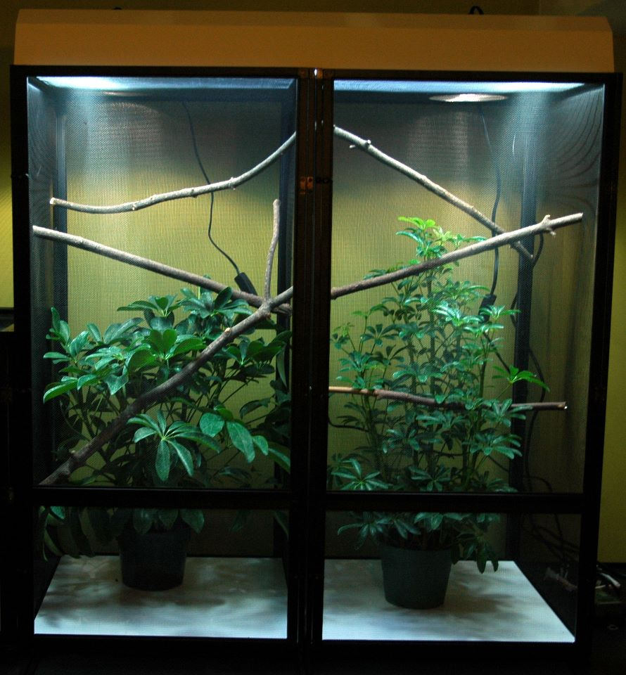 cage with greenery