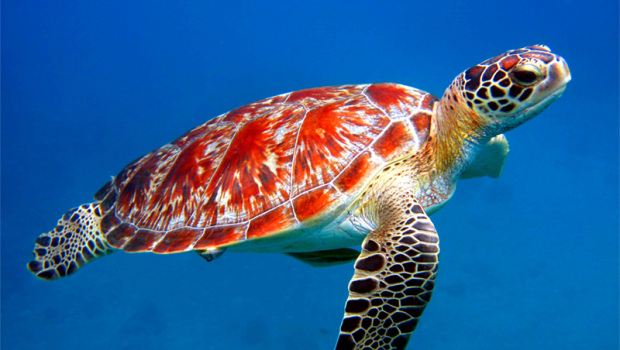 Sea-Turtle-Facts