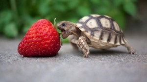 what to turtles eat
