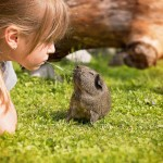 girl playing with guinea pig