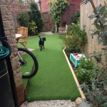 dog on Astro turf artificial grass