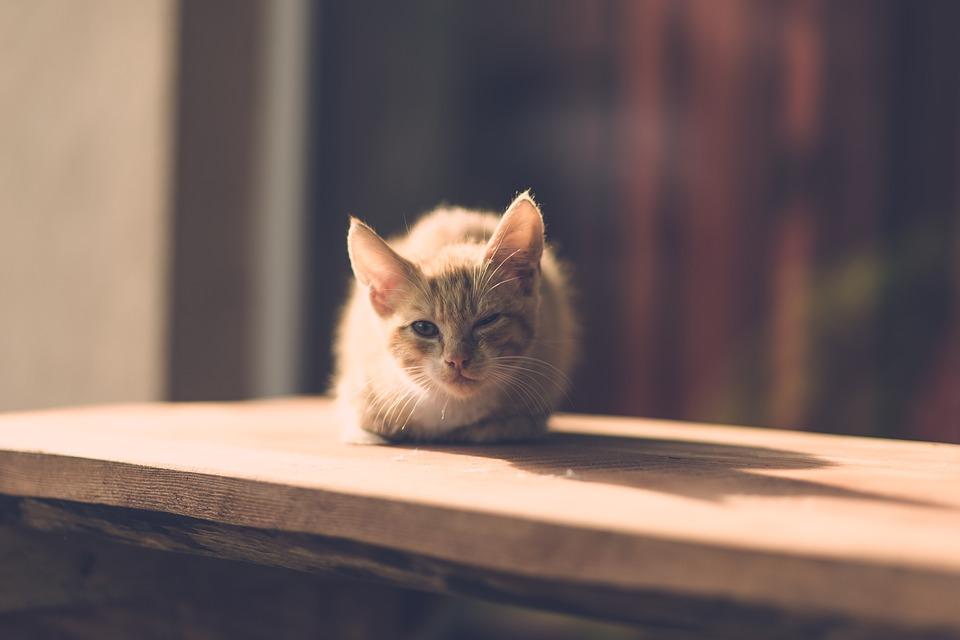 an ill cat