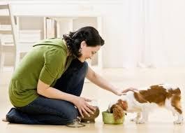 pet-sitter-1