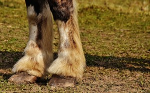 stop mud fever in horses