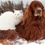 how to keep pets safe in winter