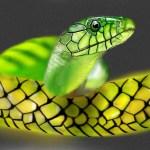 snake reptile city