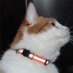 cat collar buying tips