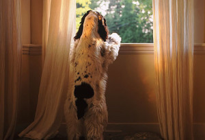 dog separation anxiety issues