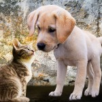choosing the right pet