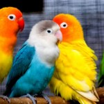 parrot care tips
