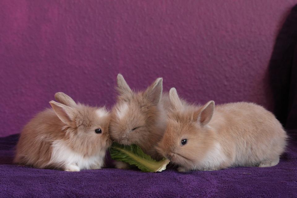 rabbits on organic food