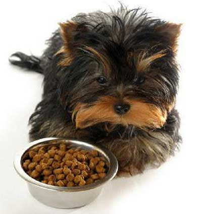 food for your yorkie