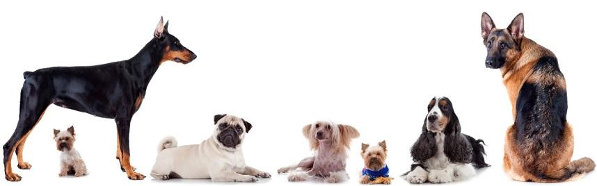 various dog breeds