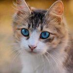 Cat Care Tips