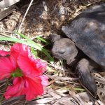 Tips to Care Properly for a Turtle