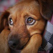 The Best Dog Hot Spot Treatment Home Remedies
