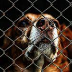 Animal fundraising