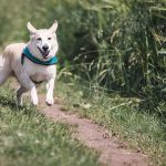 Signs of Good or Bad Health in Dogs